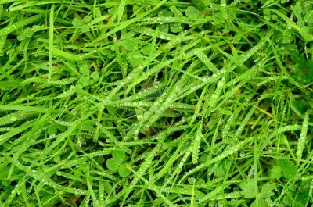 15253186-an-abstract-background-texture-of-fresh-wet-grass.jpg