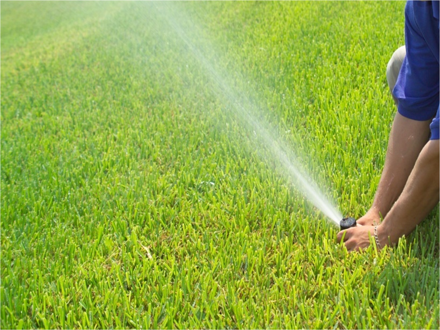 Irrigation help